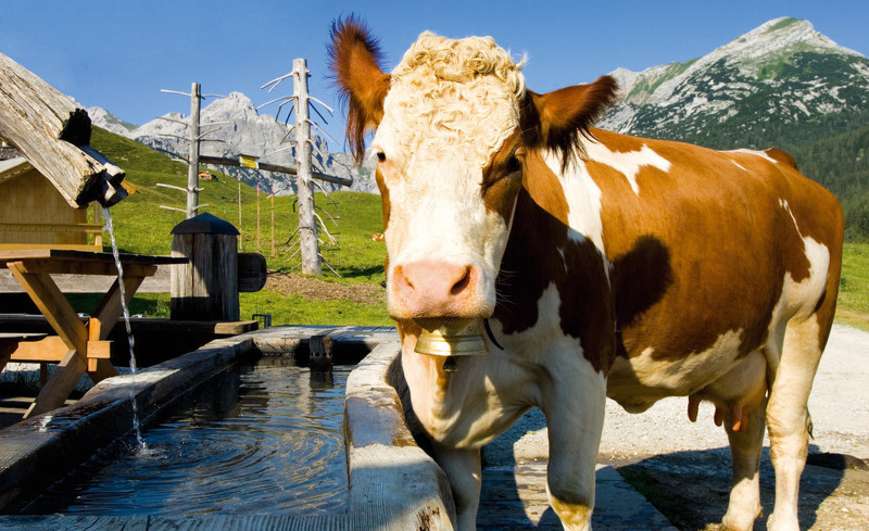 Urlaub auf der Alm im Salzburger Land - 4 Sterne Aktivhotel Alpendorf im Pongau