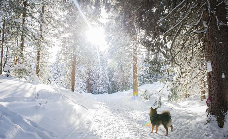 Winterzauber im traumhaften Salzburger Land