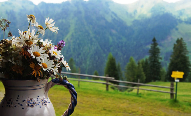 Sommerfrische in den Salzburger Alpen - Urlaub im Aktivhotel Alpendorf
