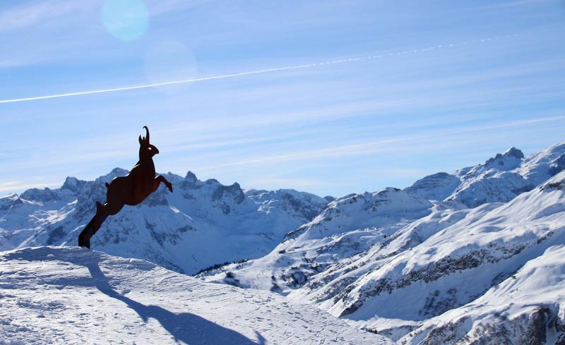 Steinbock auf dem Berg in Lech am Arlberg