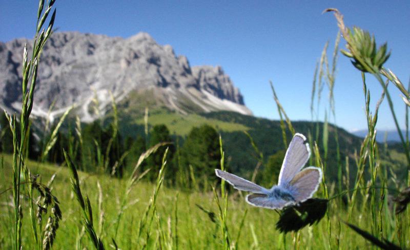 Der Ausgangspunkt für Ihren Wanderurlaub in Südtirol- Pradel Dolomites in St. Martin in Thurn