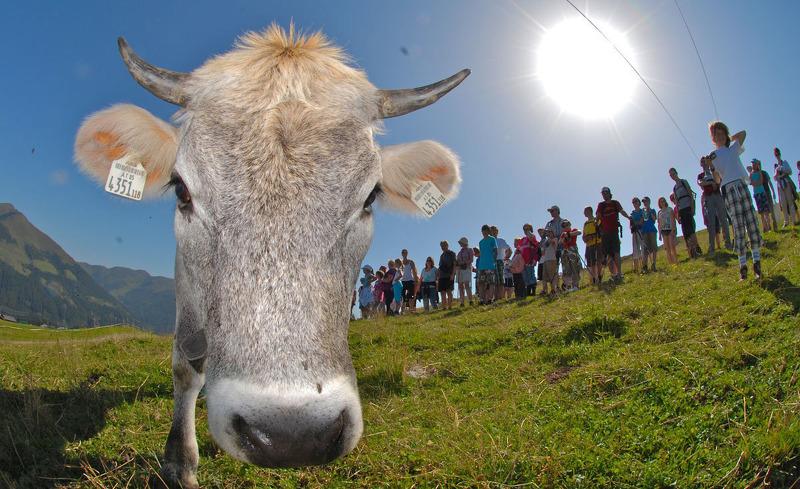 Almsommer genießen in Königsleiten im Salzburger Land