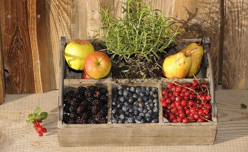 Regionales Obst direkt aus dem Bergdorfgarten- Urlaub in der Region Salzburg