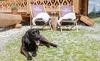 Hüttenurlaub mit Hund - Prenner Alm Hauser Kaibling