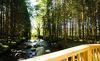 Die Forstgutchalets liegen im Naturpark Bayerischer Wald